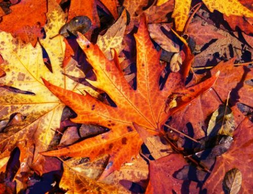 Autumn Equinox – release, integrate and manifest